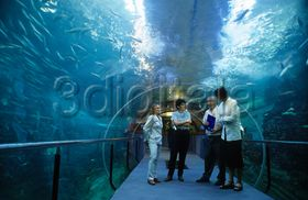 Personal del aquarium en el t nel del oceanario san - Aquarium donosti precio ...