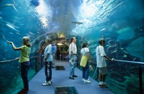 Ni os y adultos en el t nel del oceanario del aquarium de - Aquarium donosti precio ...